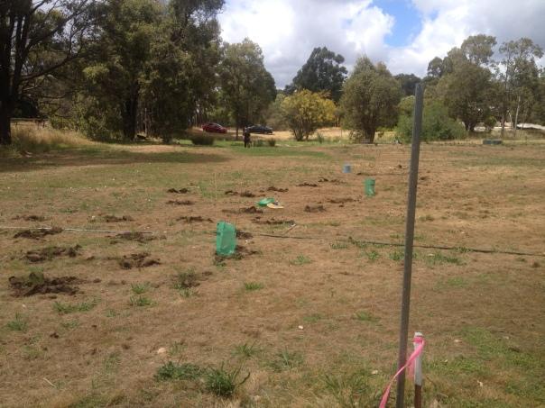 GFCG-Planting2-Nov2013
